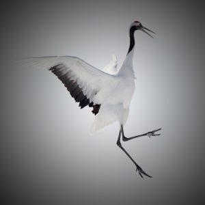 Animals-4-Crane