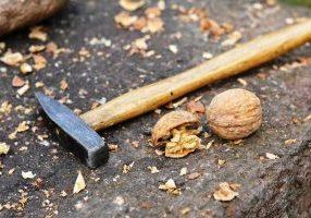 nuts-1159589_1920